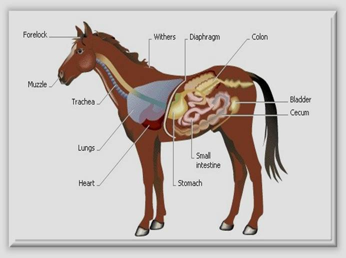 Equine Health and Disease Management